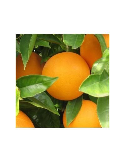 2 cajas de 8 Kg c/u Naranjas de mesa Lane Late