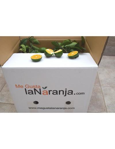 2 BOX x 8 KG MANDARINES IWASAKI