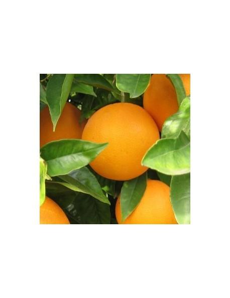 Oranges: 15 kg