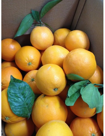 2 cajas de 8 Kg c/u naranjas zumo Midknight